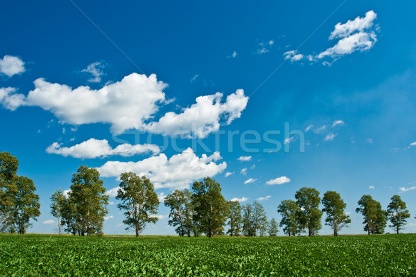 green field trees and blue skies Stock photo © chesterf