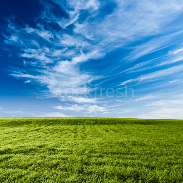 blue skies above the green field Stock photo © chesterf