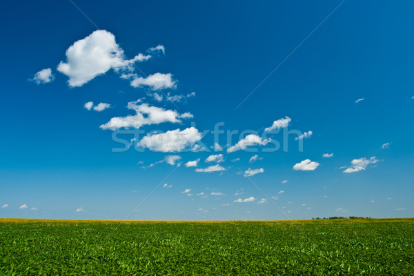 green grass blue skies  Stock photo © chesterf