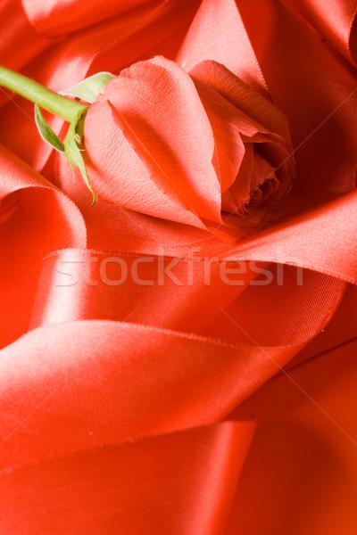 Piros rózsa szatén szalag szeretet szenvedély piros Stock fotó © chesterf