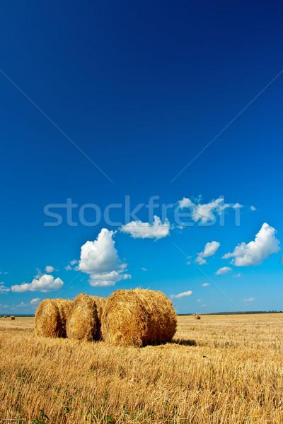 Fieno campo blu cielo natura farm Foto d'archivio © chesterf