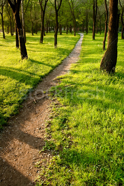 path in the morning park Stock photo © chesterf