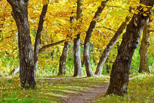 autumn park scene Stock photo © chesterf