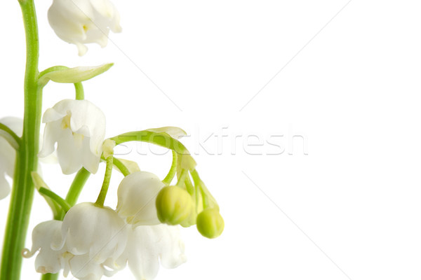 macro lily of the walley flowres Stock photo © chesterf