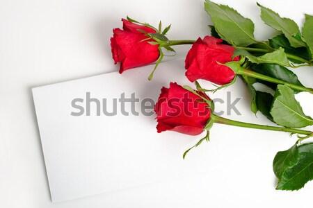 üç güller boş kart beyaz çiçek doğa Stok fotoğraf © chesterf