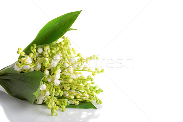 lily of the walley left position Stock photo © chesterf
