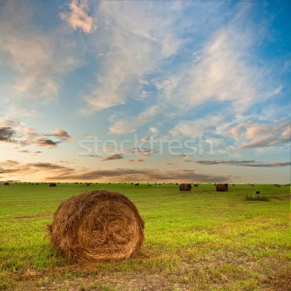 Széna mező zöld naplemente természet kék Stock fotó © chesterf