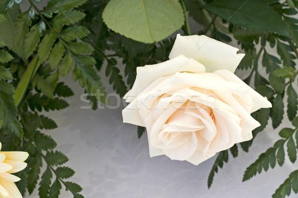Rózsa háttér nyár zöld rózsaszín friss Stock fotó © cheyennezj