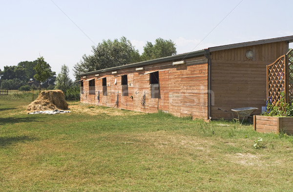Horse stable  Stock photo © cheyennezj
