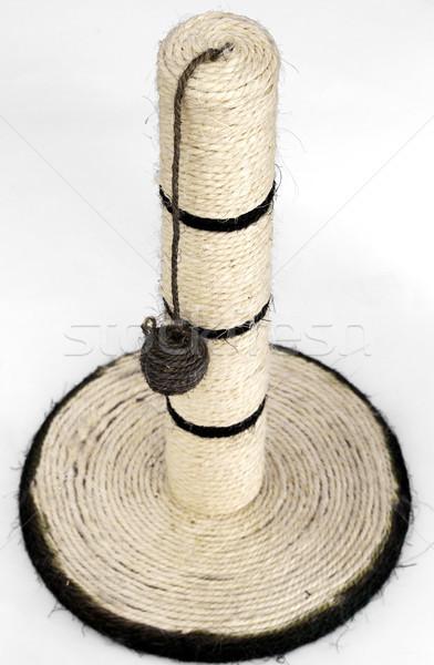 Gato postar estúdio corda raspe suporte Foto stock © cheyennezj