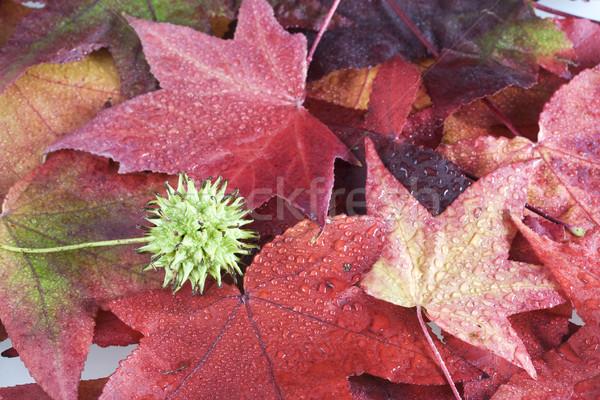 Stock photo: Autumn background