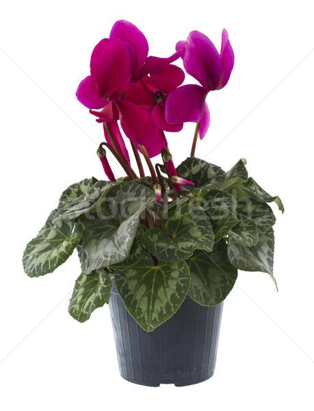 Szín ajándék növény kártya románc edény Stock fotó © cheyennezj