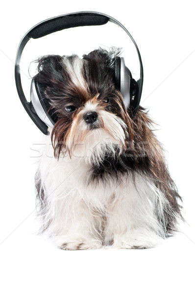 Cão ouvir música branco fones de ouvido diversão soar Foto stock © choreograph