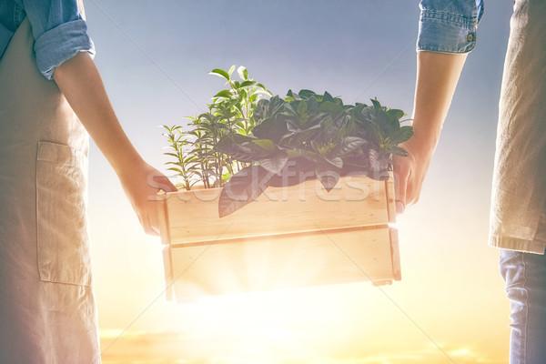 Felnőtt gyermek tart palánták generáció fejlesztés Stock fotó © choreograph