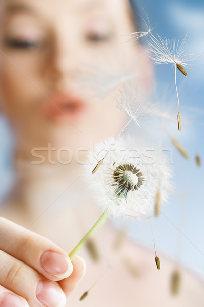 dandelion in hand Stock photo © choreograph