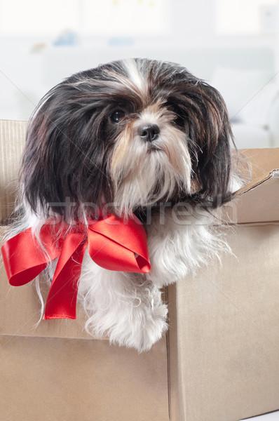 Chiot cute boîte chien rouge présents Photo stock © choreograph