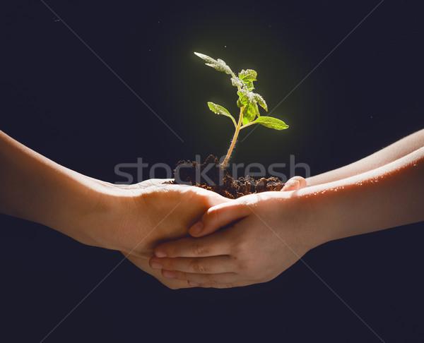 成人 子 緑 芽 世代 ストックフォト © choreograph