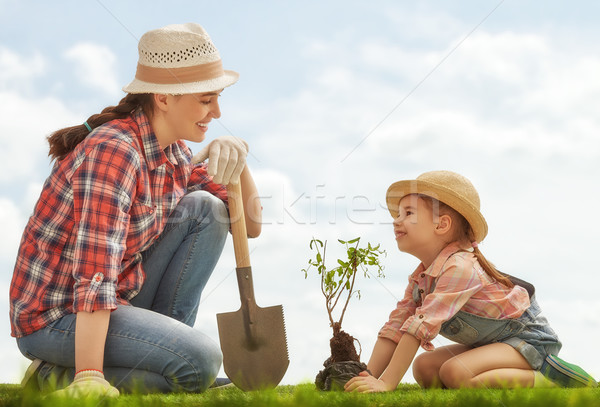 girl plant sapling tree Stock photo © choreograph