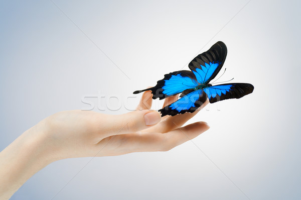 Schmetterling Sitzung Palmen Hand Frauen Freiheit Stock foto © choreograph
