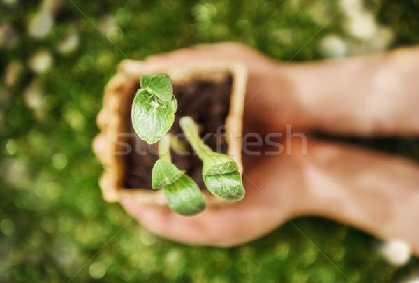 Kezek tart hajtás növények közelkép felső Stock fotó © choreograph