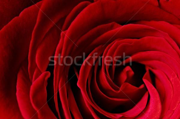 flower Stock photo © choreograph