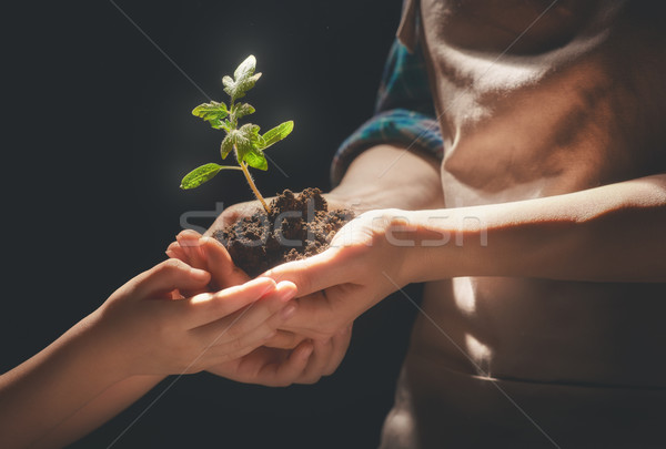 Adult and child holding green sprout. Stock photo © choreograph