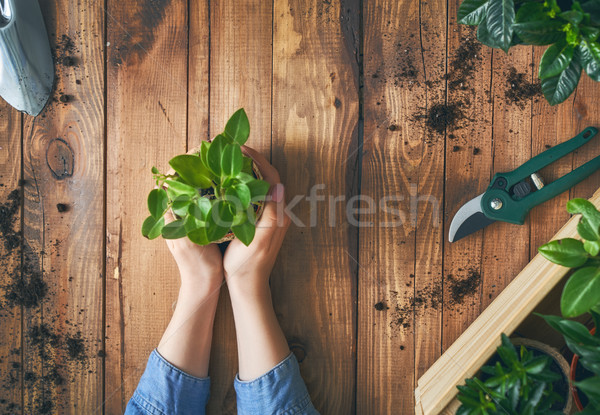 Person holding green sprout. Stock photo © choreograph