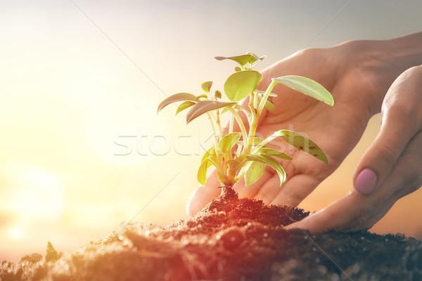 Stok fotoğraf: Kişi · yeşil · nesil · gelişme
