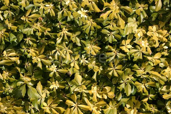 Növények zöld növény különböző hátterek nap Stock fotó © chrisbradshaw