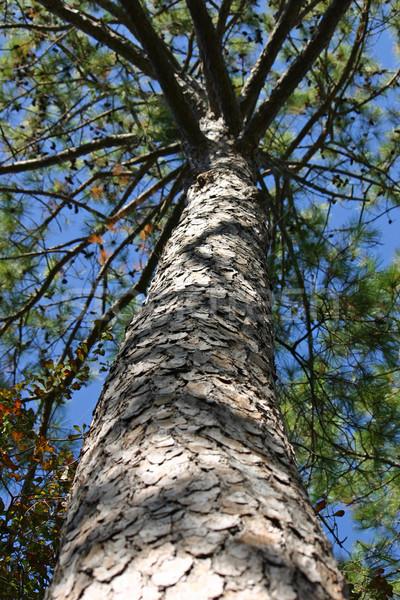 дерево мнение лес Сток-фото © chrisbradshaw