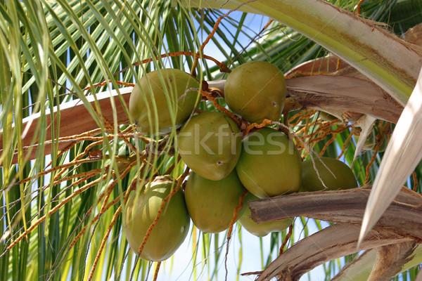 свежие Солнечный пальма небе лист Сток-фото © chrisbradshaw