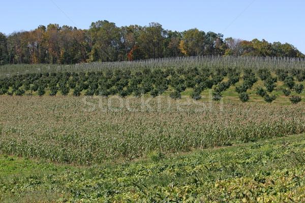 Boomgaard mooie landschap boom vruchten Stockfoto © chrisbradshaw
