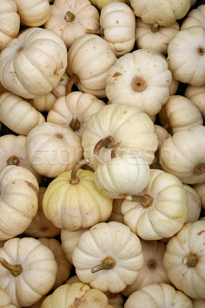 Bianco zucche grande gruppo baby farm autunno Foto d'archivio © chrisbradshaw