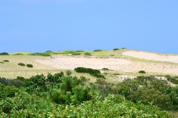 Massachusetts kék ég égbolt fű természet háttér Stock fotó © chrisbradshaw