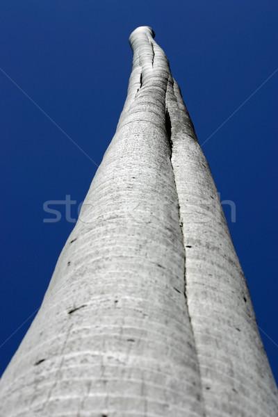 Albero no top cielo blu natura Foto d'archivio © chrisbradshaw