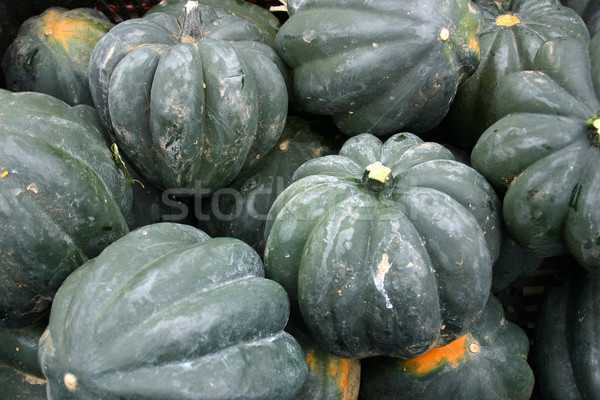 Acorn Squash Stock photo © chrisbradshaw