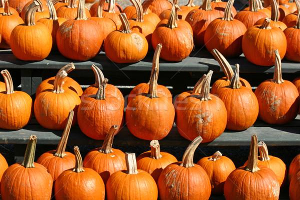 Grand groupe lumineuses orange ferme marché Photo stock © chrisbradshaw