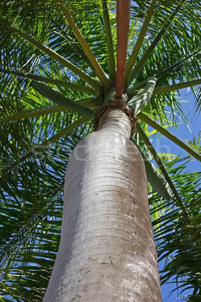 пальма довольно небе лист путешествия Сток-фото © chrisbradshaw