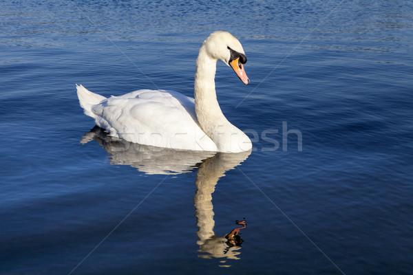 лебедя пруд садов Лондон воды природы Сток-фото © chrisdorney