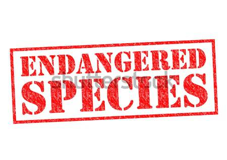 ENDANGERED SPECIES Stock photo © chrisdorney