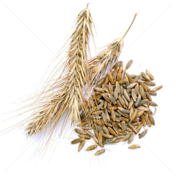 ライ麦 孤立した トウモロコシ 収穫 ストックフォト © ChrisJung