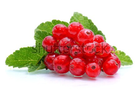 Redcurrant Stock photo © ChrisJung