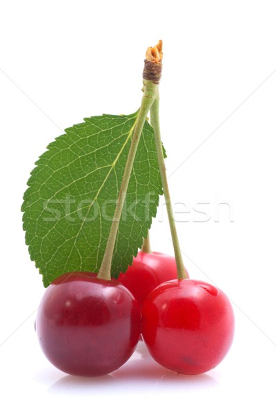 Morello cherries Stock photo © ChrisJung