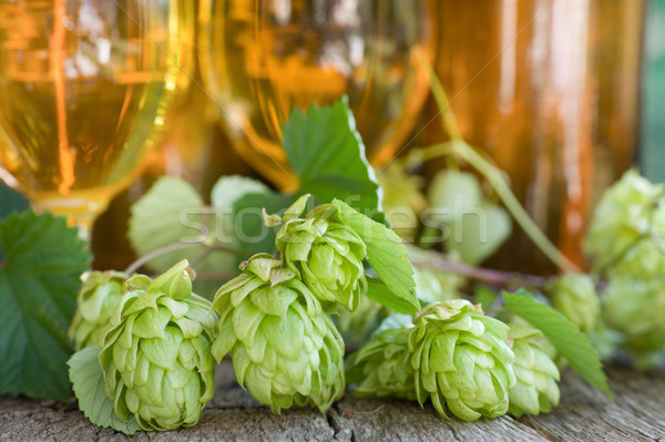 Hops Stock photo © ChrisJung