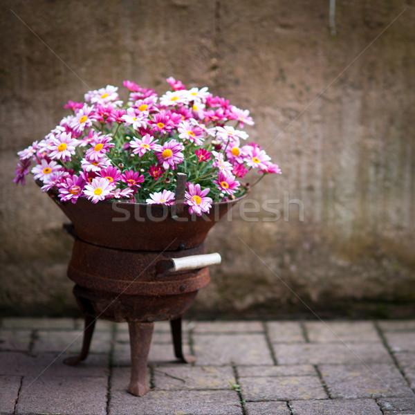 Flowers Stock photo © ChrisJung