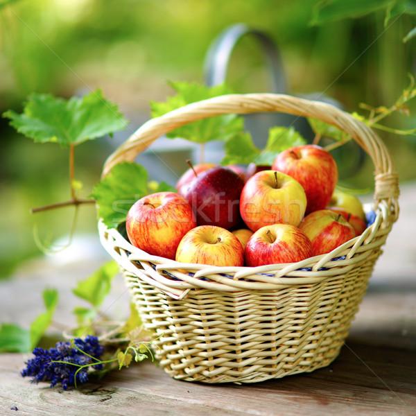 Colheita tempo cesta maçãs jardim outono Foto stock © ChrisJung