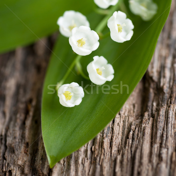 Lilies of the valley  Stock photo © ChrisJung