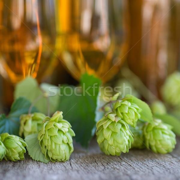Hops Stock photo © ChrisJung