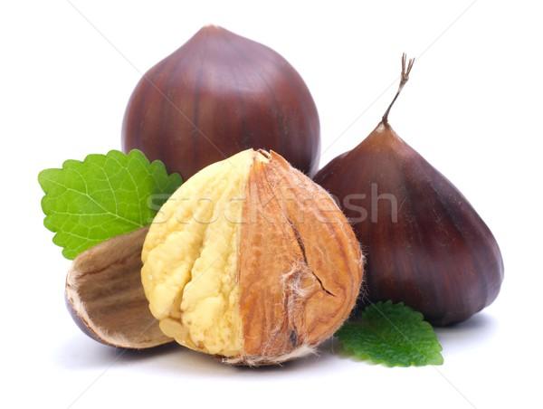 Chestnut Stock photo © ChrisJung