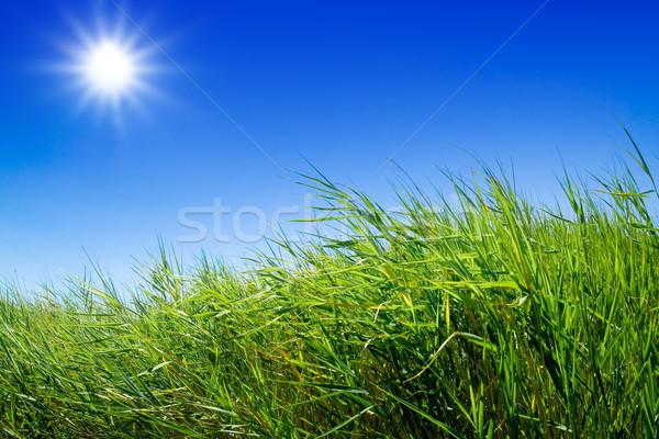 Groene weide blauwe hemel landschap zon natuur Stockfoto © chrisroll